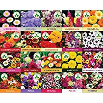 Get Only For Organic Twenty Winter Flower Seeds(4800+ Seeds) With Cocopeat Block And Instruction Man