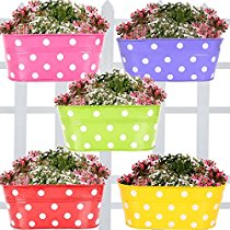 Get Planters at upto 50% off at Rs 249 | Amazon Offer
